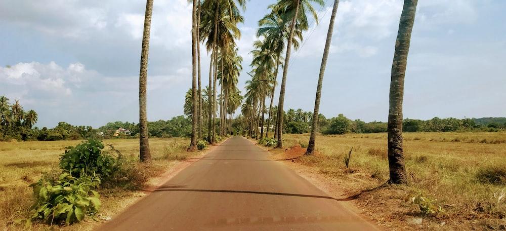 trees near road