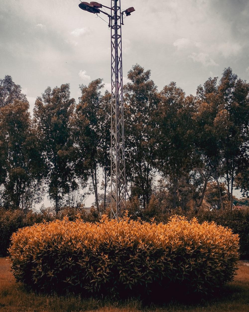 trees near tower