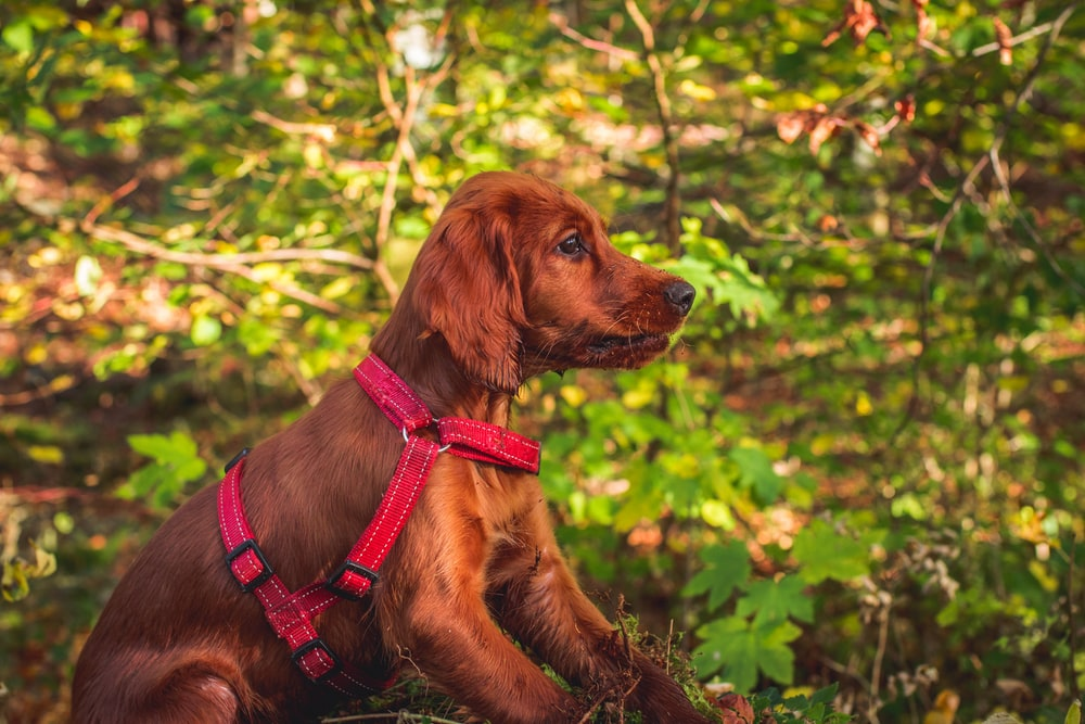 short-coated brown dog near tree
