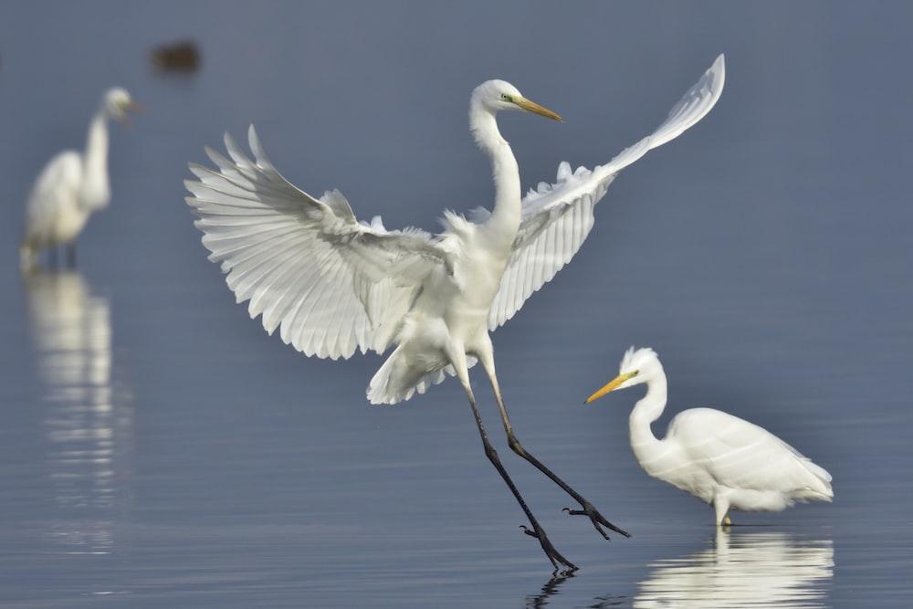 white birds on water