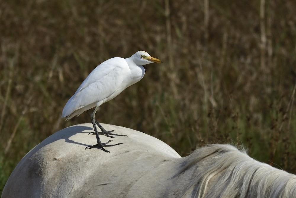 white small beaked bird
