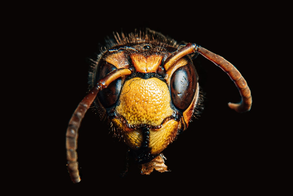 brown insect