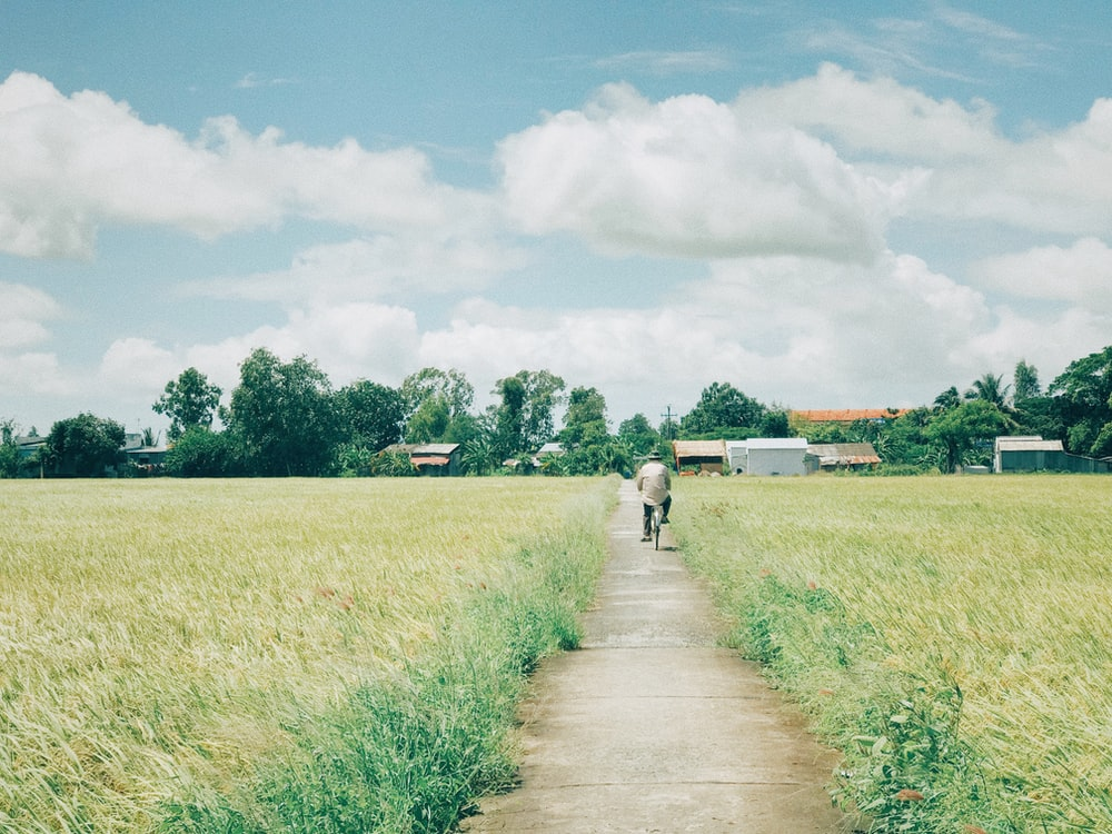 man riding bike on pathway in the middle of plant field