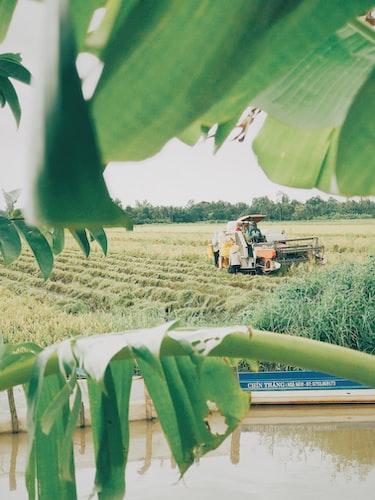 harvester machine on plant field