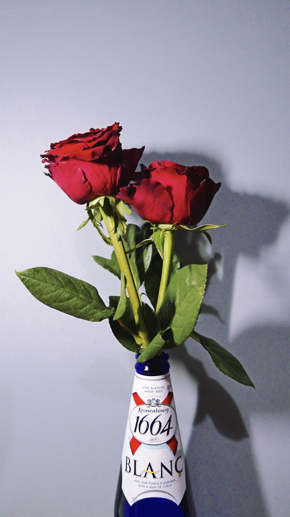 two red roses in bottle