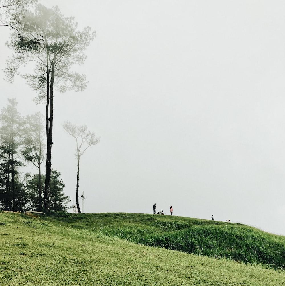 people on grass field