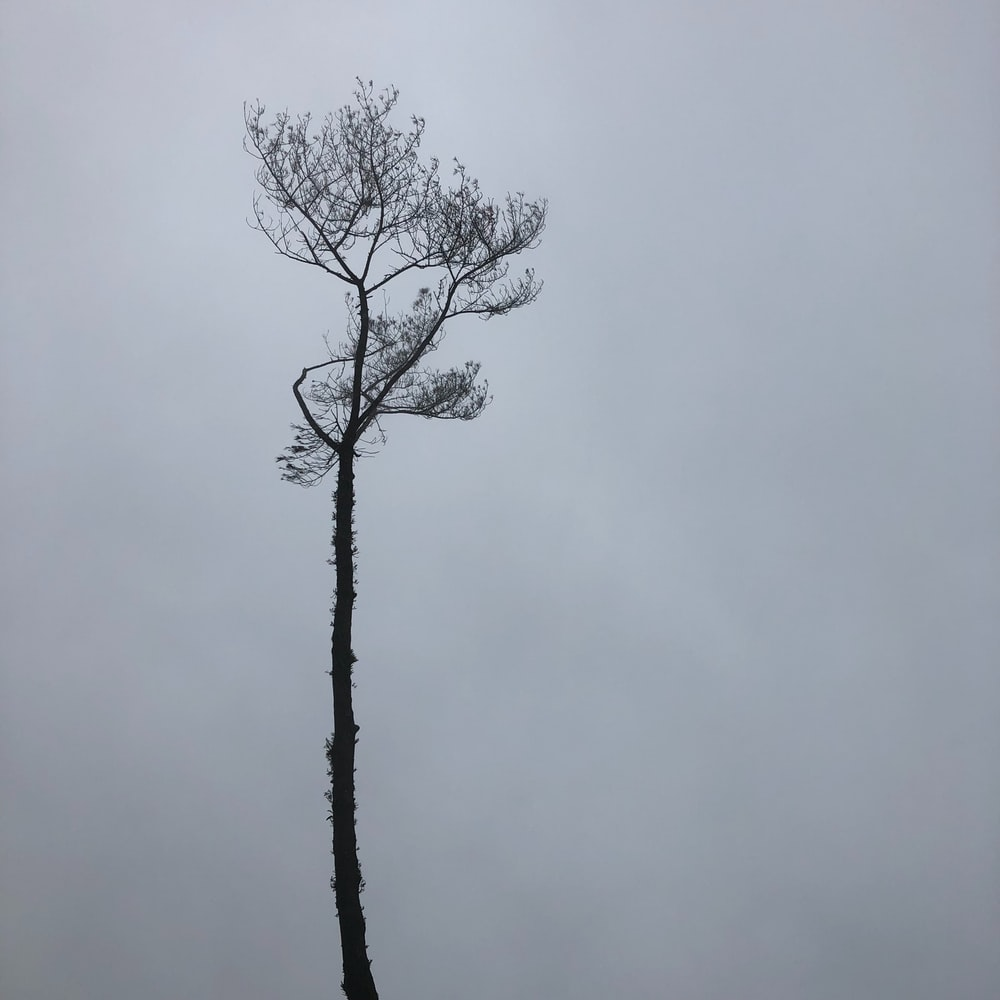 tree on cloudy day