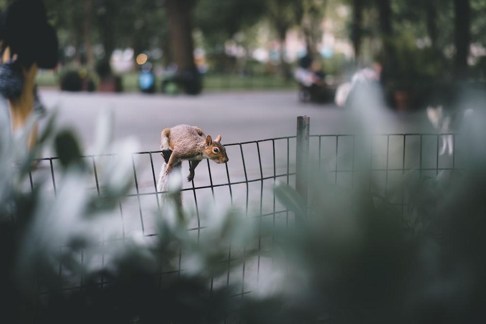 brown animal on fence