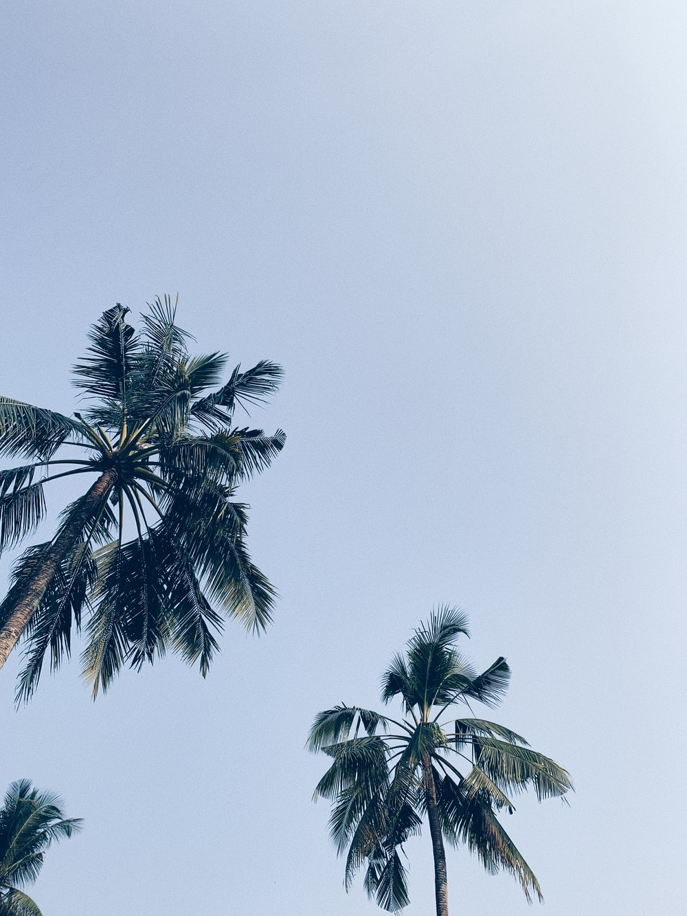 green-leafed palm trees