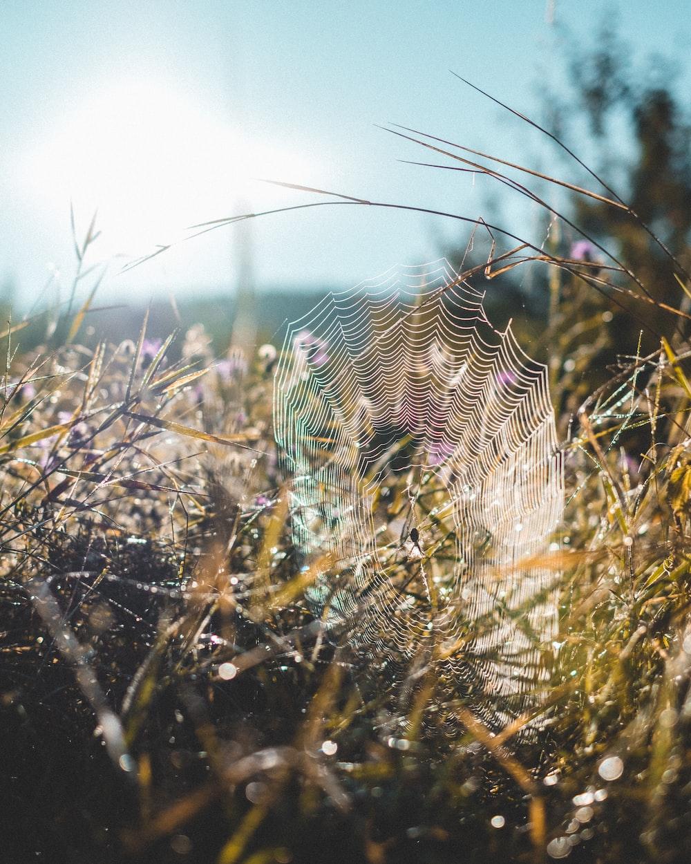 spider web near plants