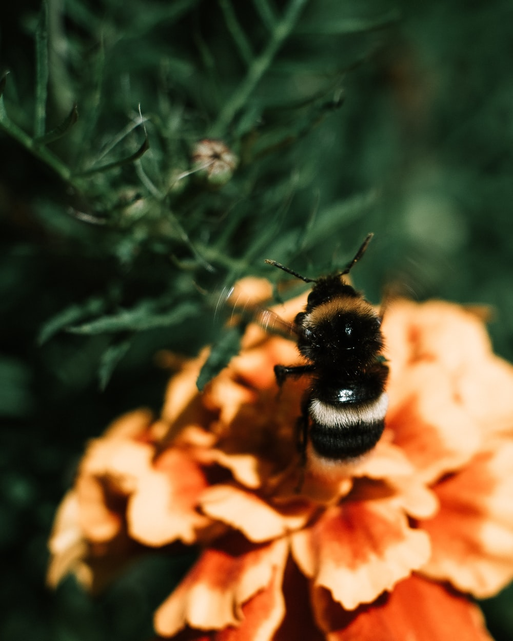 black and brown bee on flower