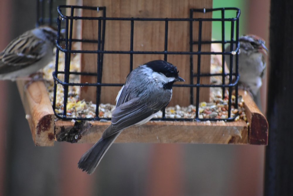three gray birds