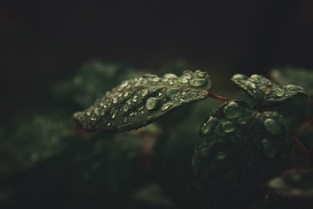 shallow focus photography of green-leafed plant