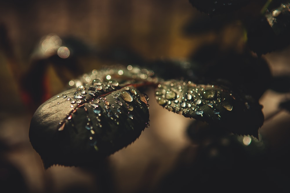 selective focus photography of dew drops on leaves