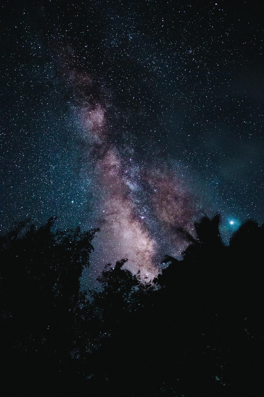 silhouette of trees across starry sky