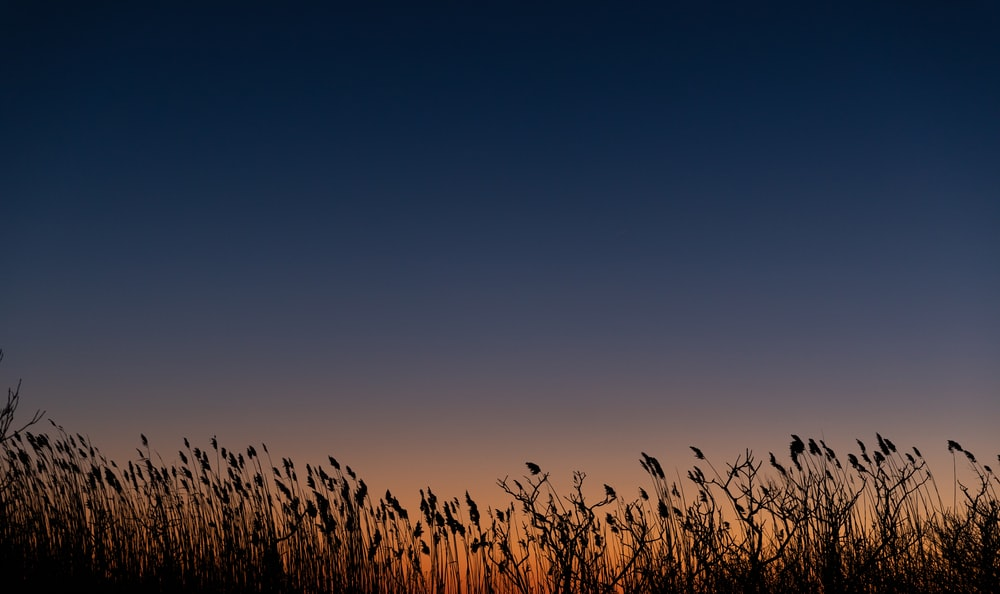silhouette photography of grass