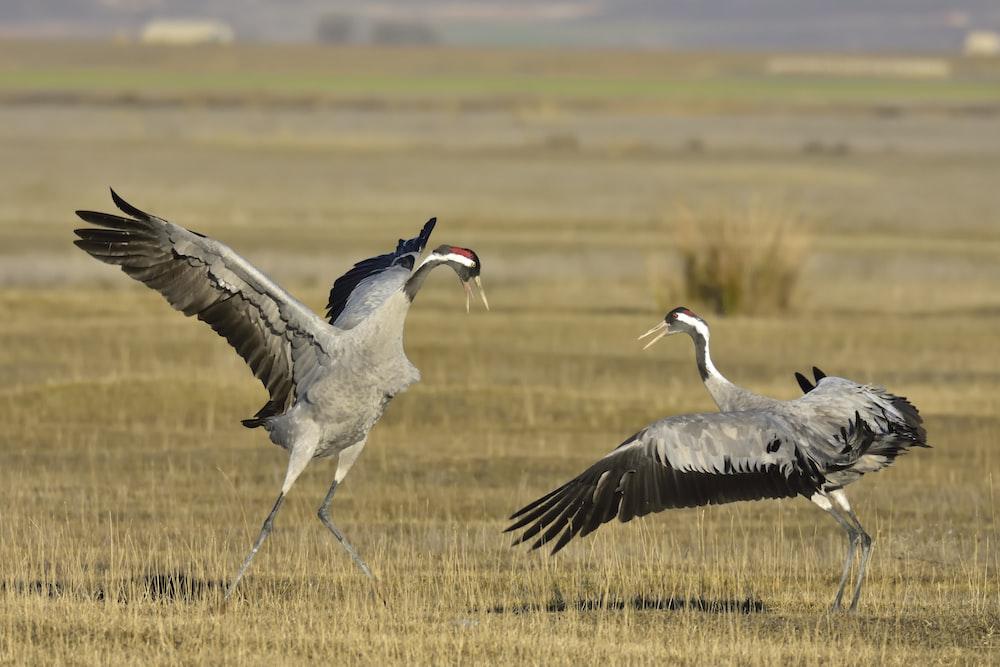 birds on field