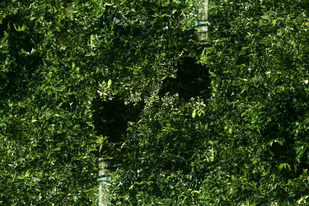green leafed glass