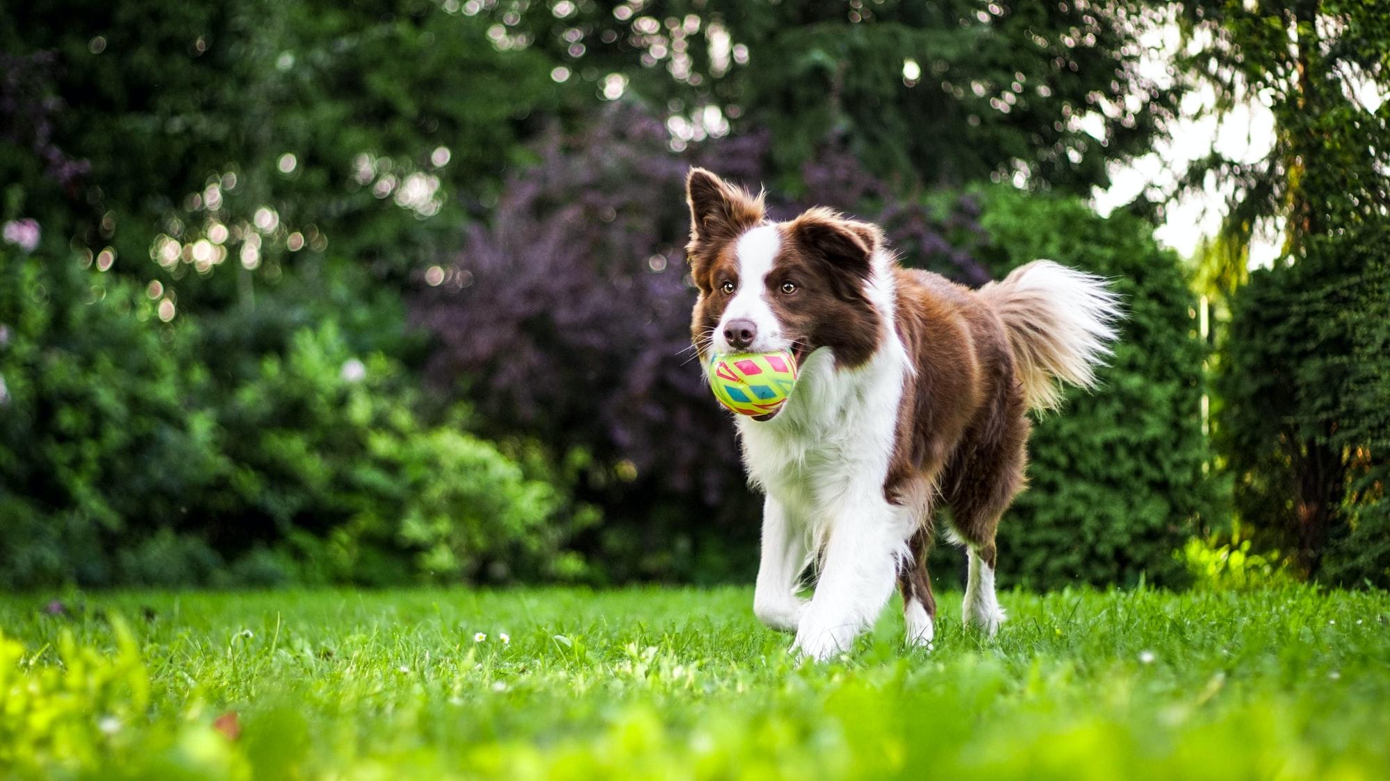 Quali giochi scegliere per il nostro cane?