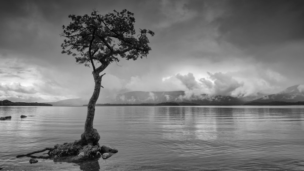 green tree on body of water