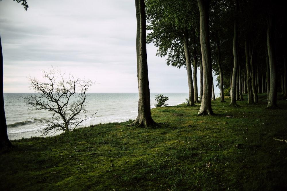 green trees near ocean