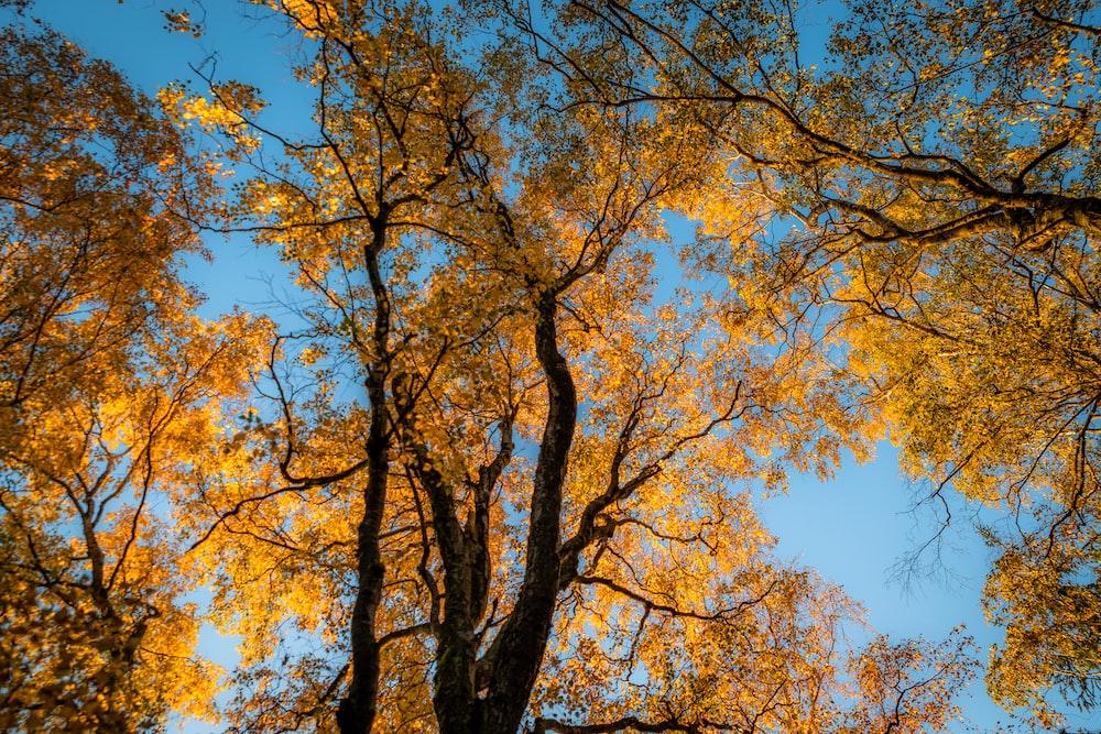 brown tree during daytim