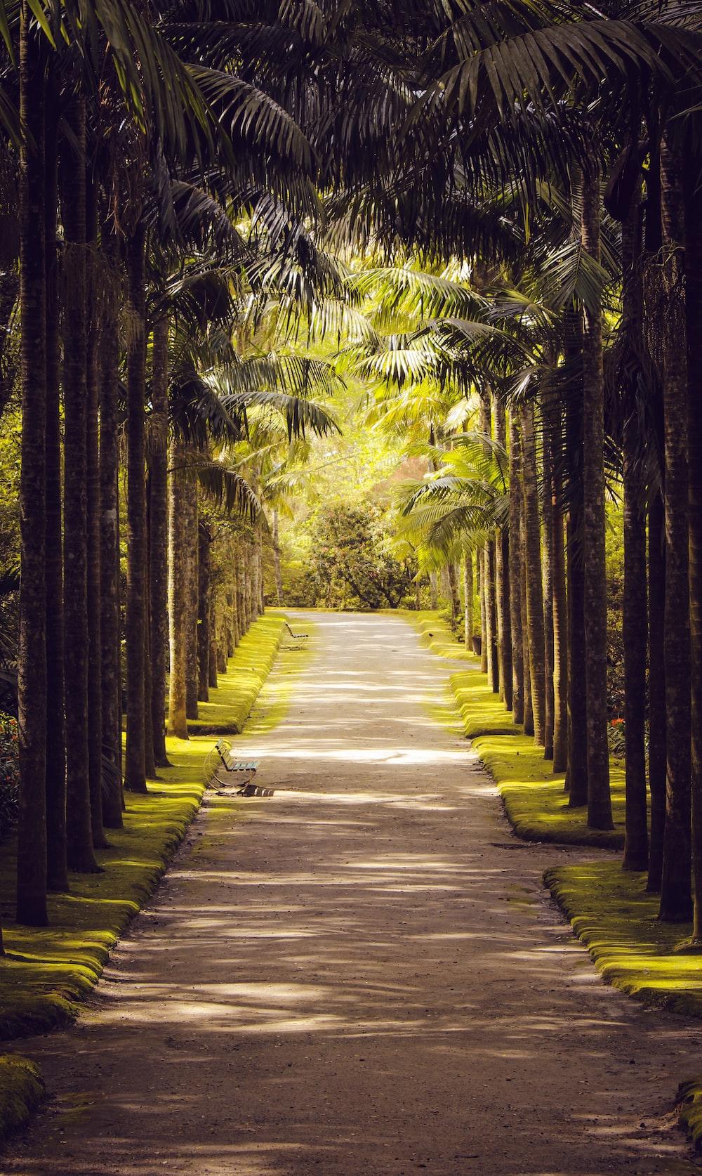 coconut palm tree tunnel