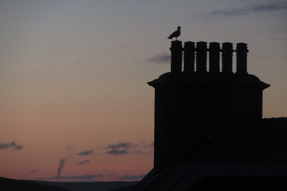 silhouette of bird perching on building