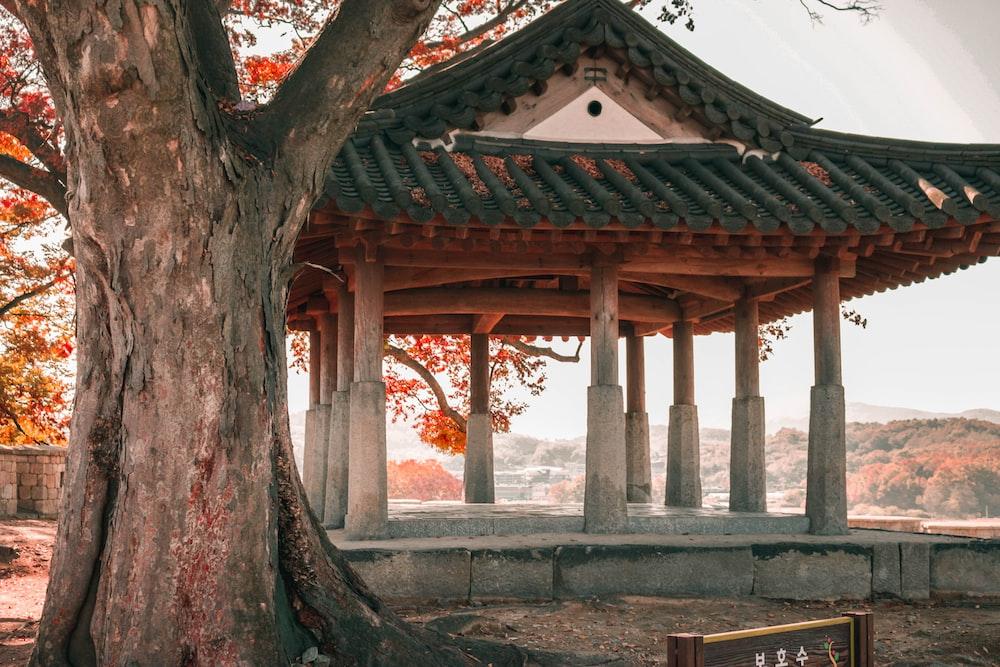 gazebo near large tree