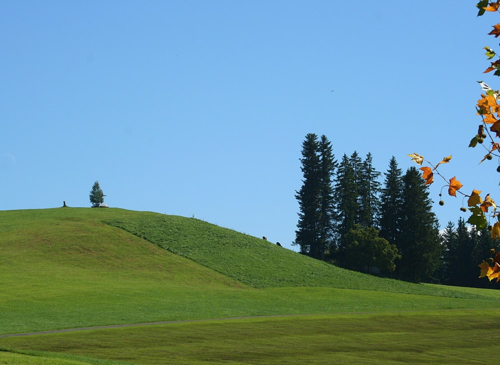 green grass field near trees at daytime