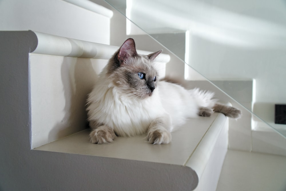long-fur white can lying on white stairs