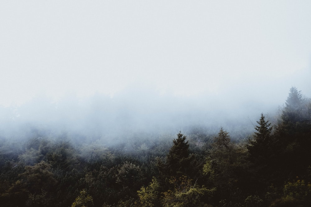 green forest covered with fogs during daytime