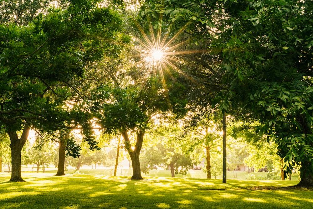 sun shining on tree
