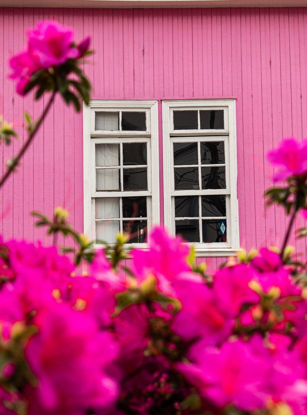 pink-petaled flower closeup photography