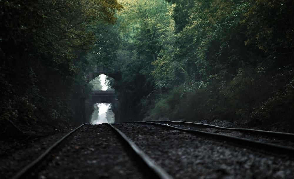 railway between trees