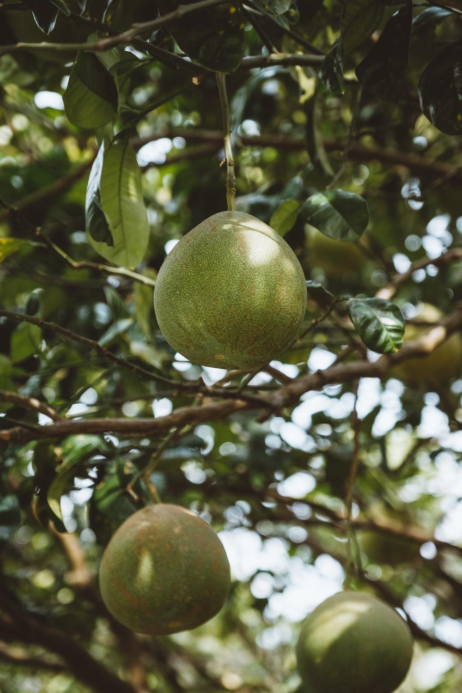 three round green fruit