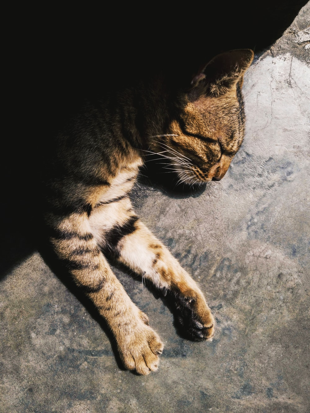 silver tabby cat lying on concrete surface
