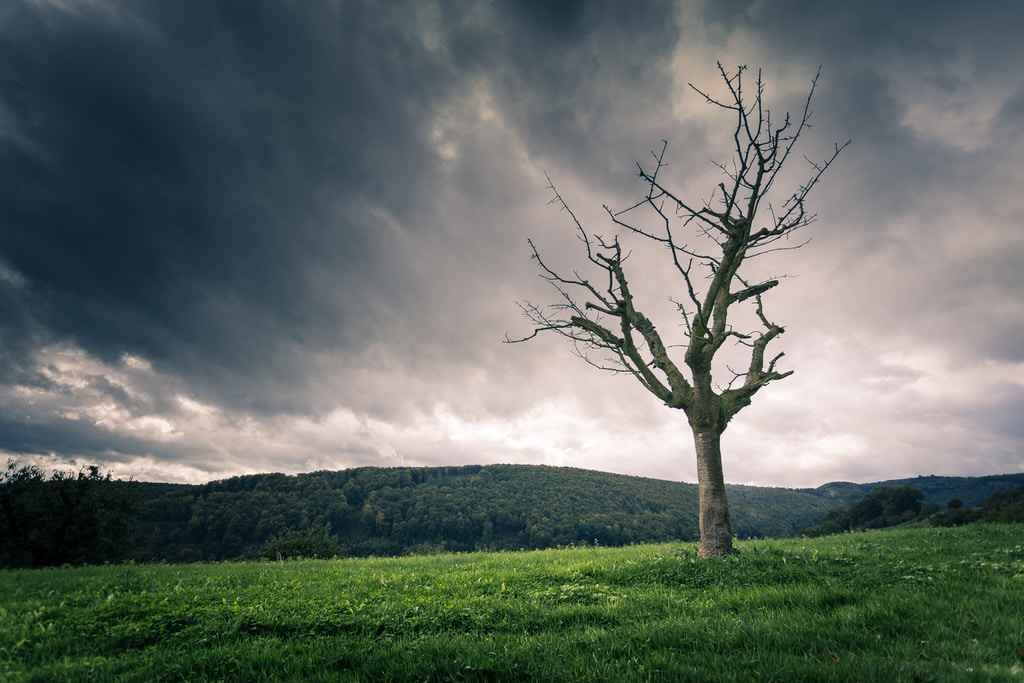 brown bare tree under cloudy sky