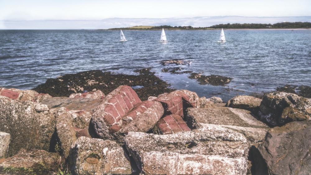 three white sailboats on sea