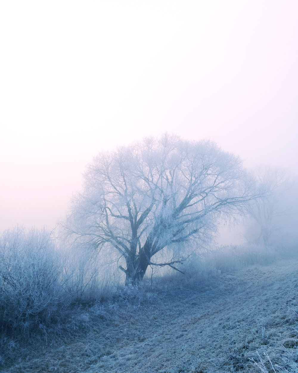 tree surrounded by fogs