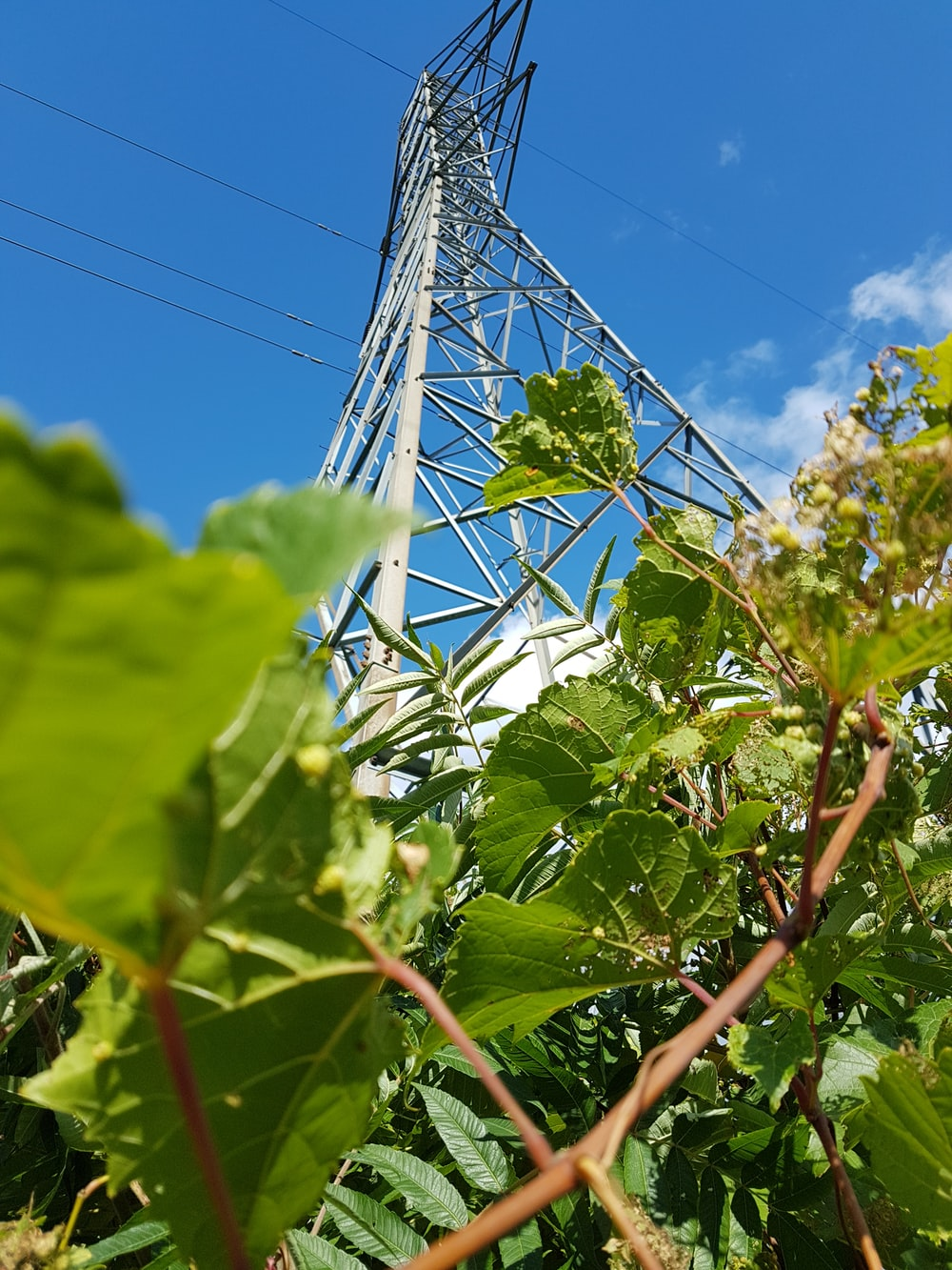 low-angle photo of green-leafed plants near gray transmission tower