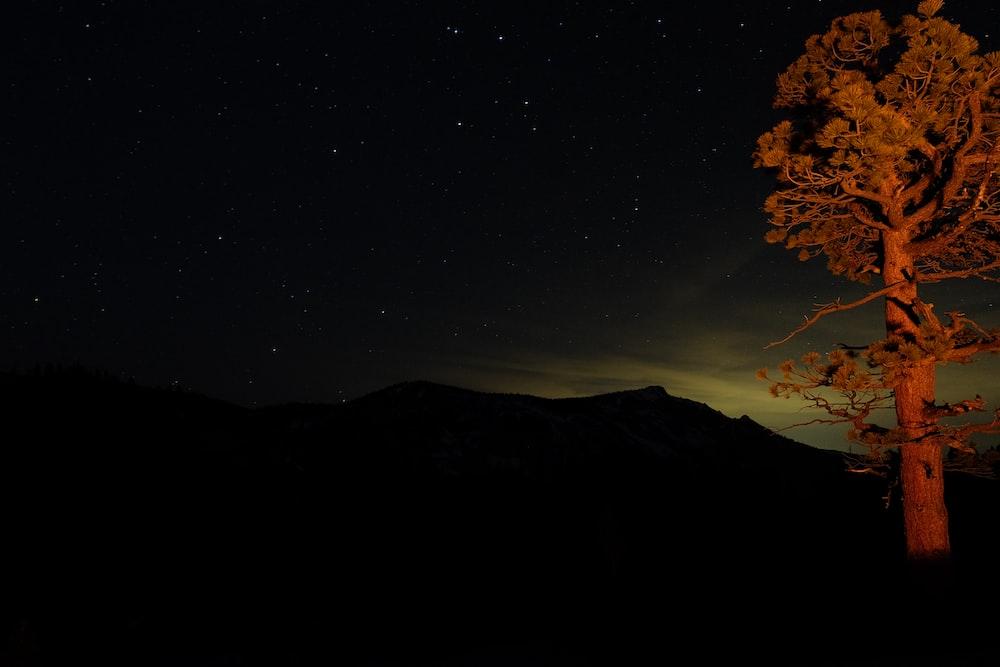 green trees at night