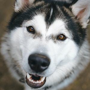white and black dog