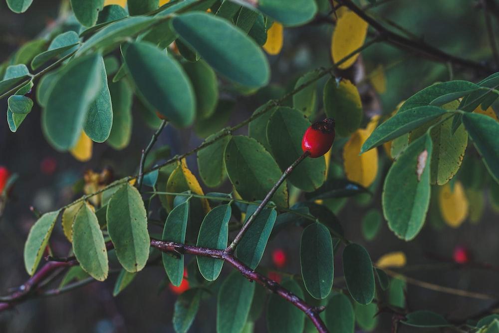 round red fruit during daytime