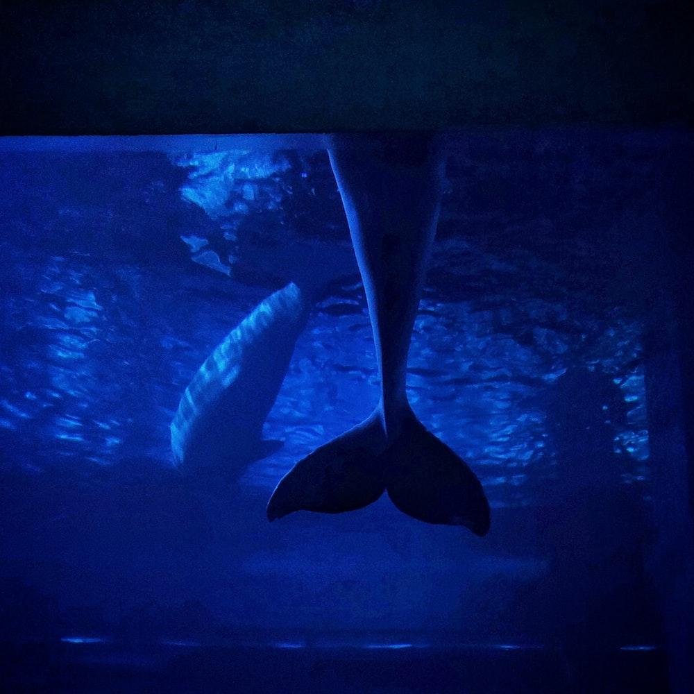 gray shark screengrab