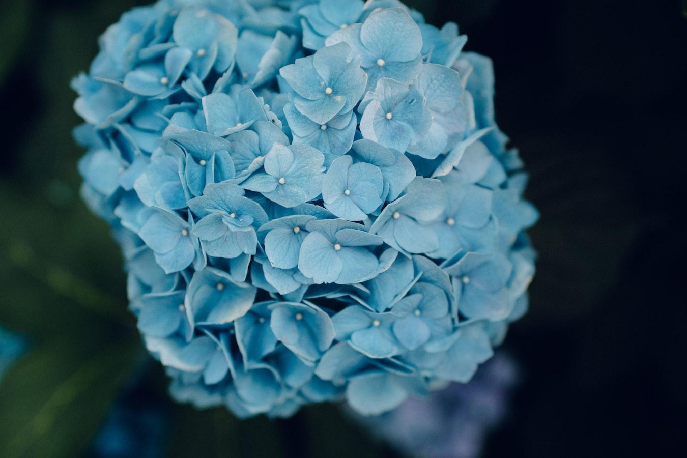 light-blu-flower