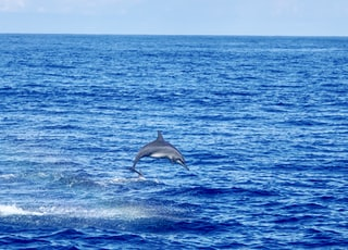 dolphin jumps off the sea