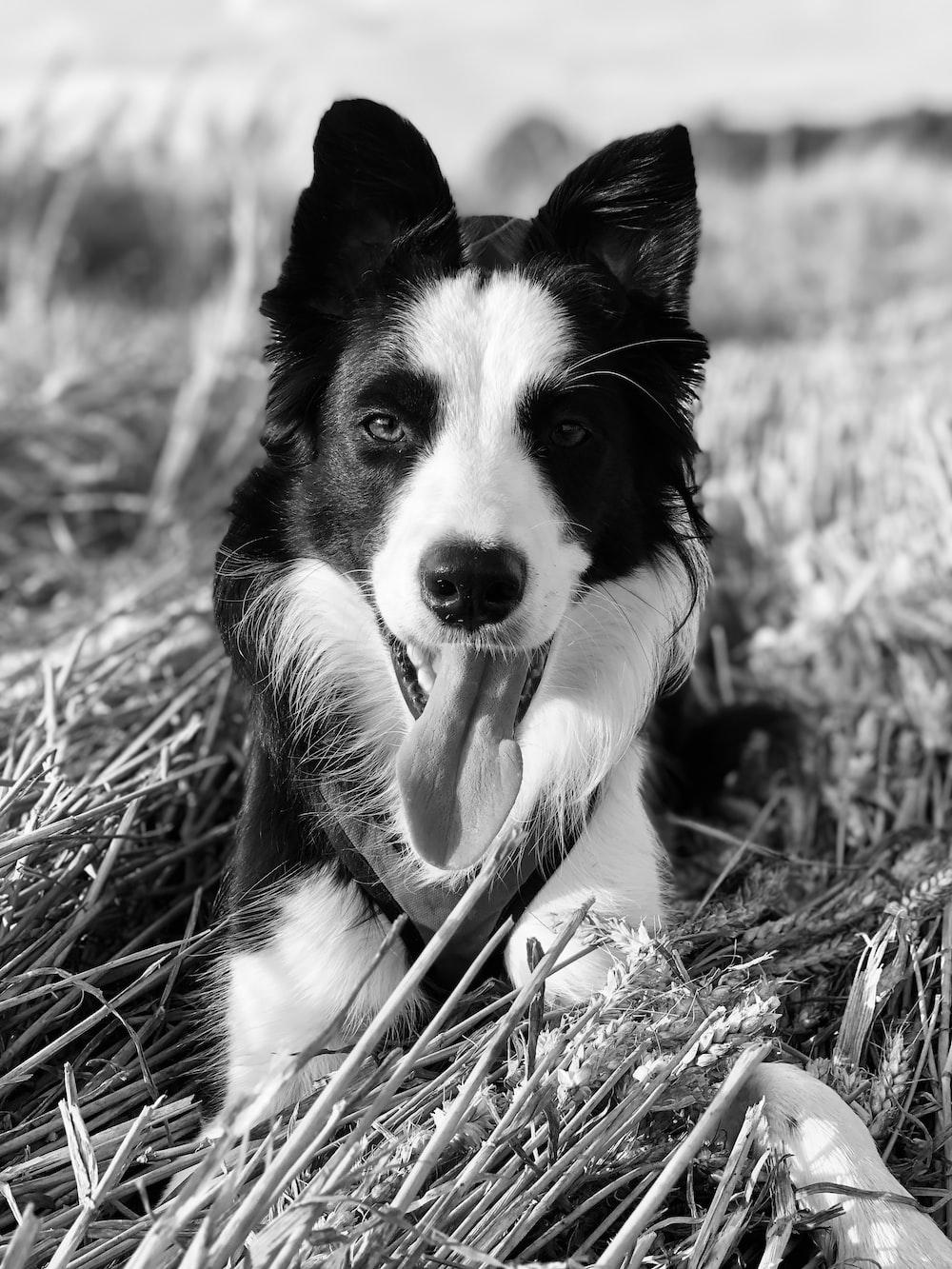 monochrome photo of dog on grass