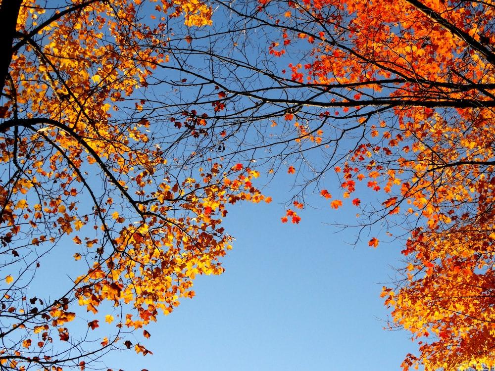 orange-leafed trees