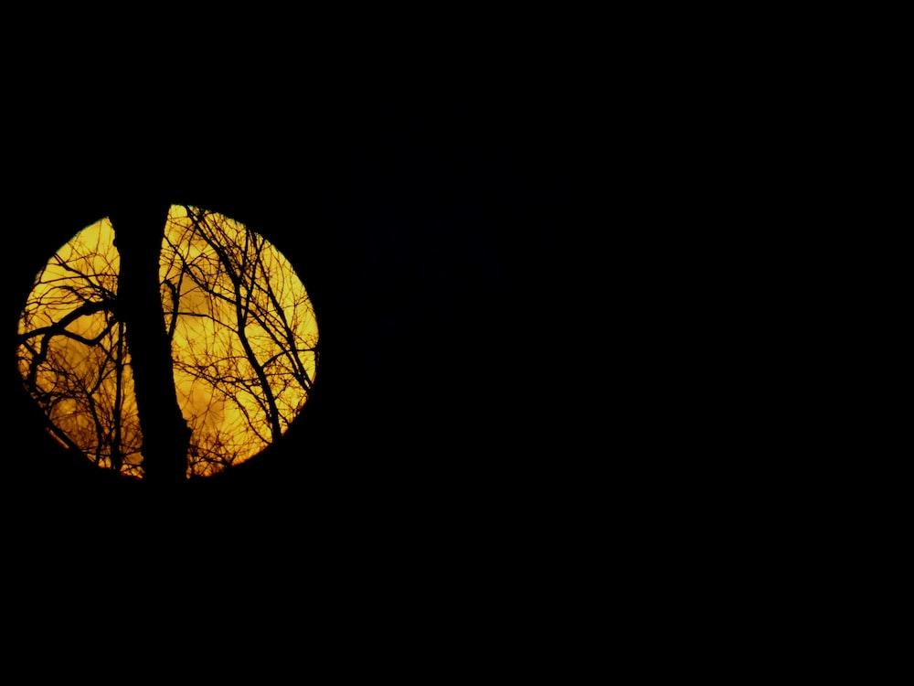silhouette of trees across moon